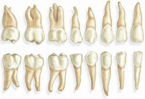 Название зубов как понимать обозначения стоматологов