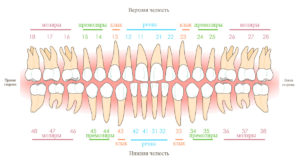 Стоматологическая нумерация